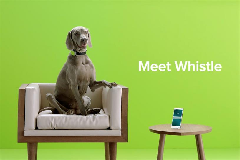 Fat Lemon recently worked on a campaign for Mars Petcare brand Whistle