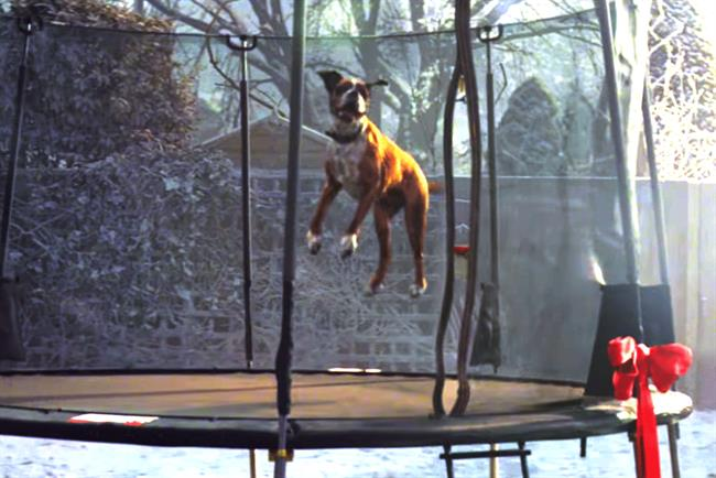 Buster: the star of this year's John Lewis ad for Christmas