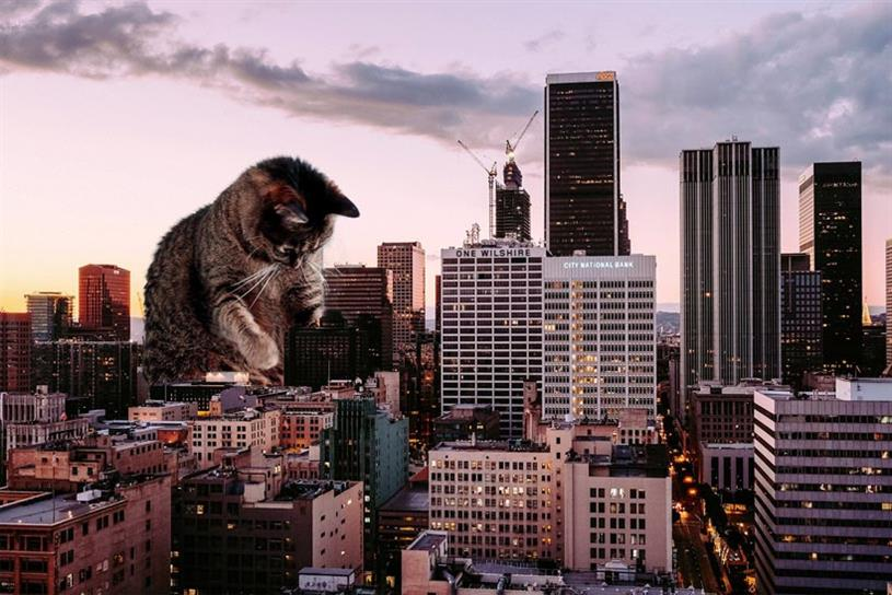 Los Angeles will be one of five cities to see ads replaced by cat pictures