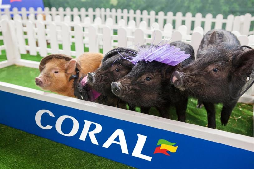 Micropig-punters stand by and watch the first race