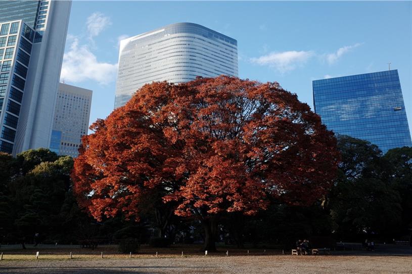 Dentsu's Tokyo headquarters seen from the Hamarikyu Garden