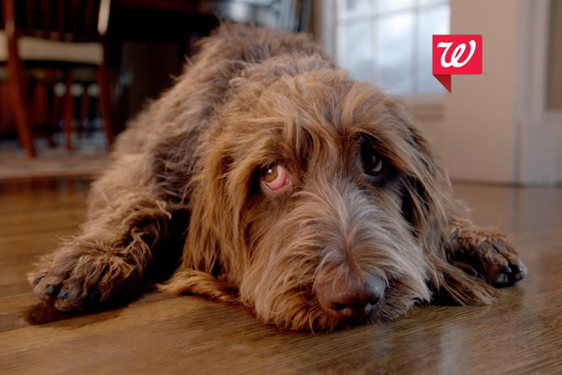 walgreens gives puppy love this holiday season campaign us - Walgreens Christmas Commercial