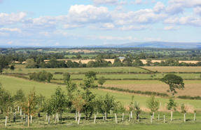 Greenfield land: CPRE says major new housing development is being allowed to sprawl across countryside