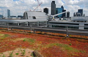 Green roofs: partnership aims to see more created