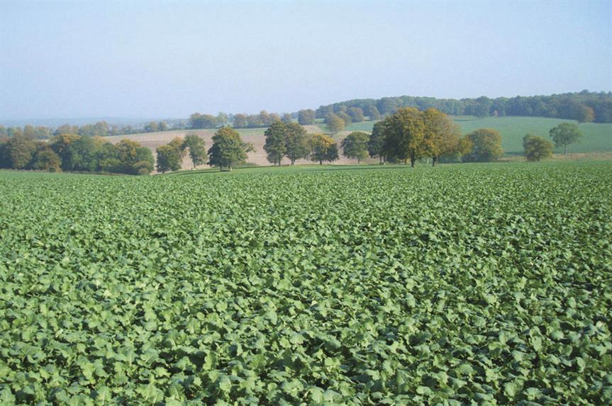 Green belt land near Guildford, Surrey
