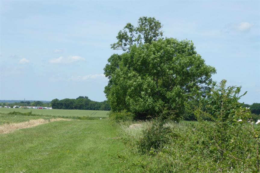Green belt land in Havering. Image: Creative Commons