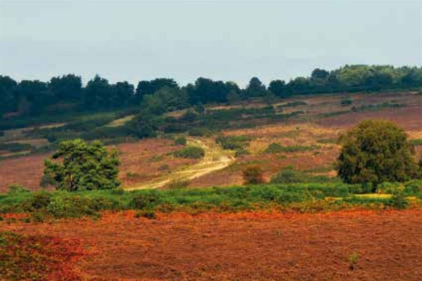 European sites: experts say habitats assessment judgement could stall progress on neighbourhood plans