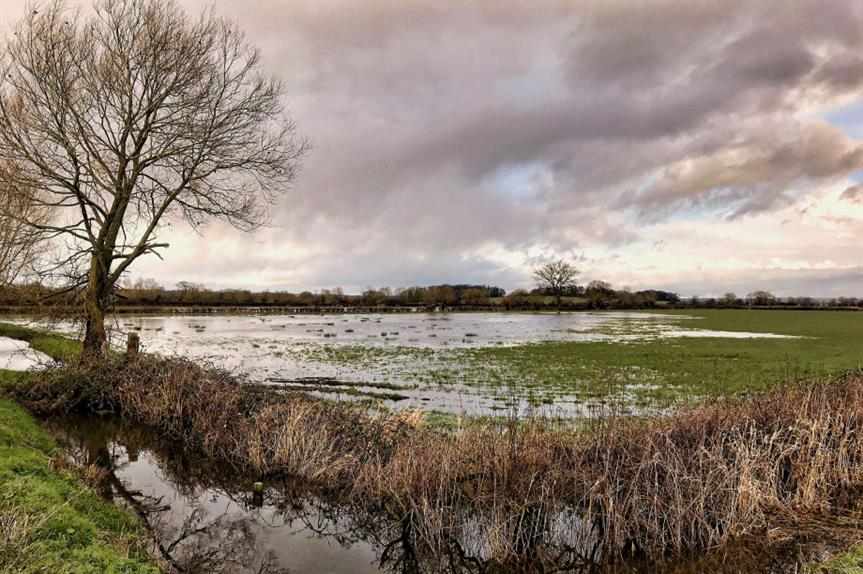 Somerset Levels: Natural England issues warning over phosphate levels. Pic: Flickr / Alison Day