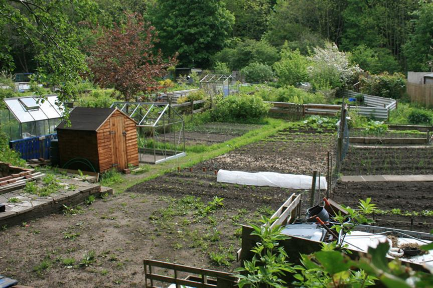 Allotments: campaigners fighting to save Watford site from development