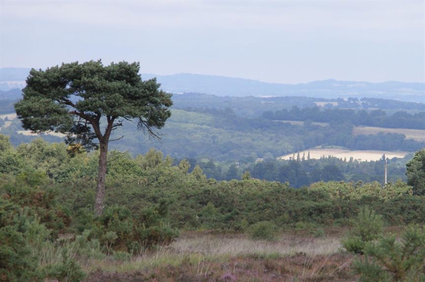Ashdown Forest (pic Amanda Slater, Flickr)