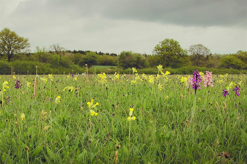 Bernwood Meadow, a hectare nature reserve in Buckinghamshire. Pic: Rhea Draguisky