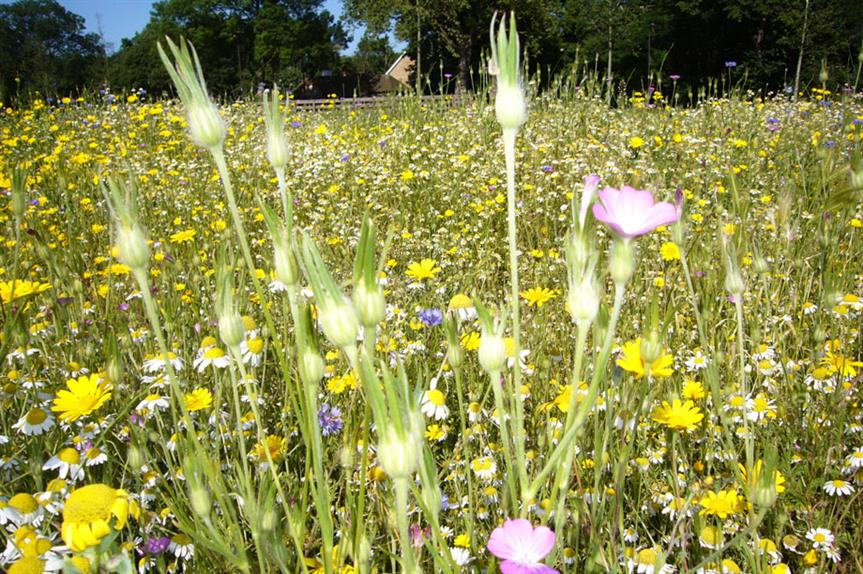Biodiversity: offsetting should only be used as a last resort (picture: Horticulture Week)