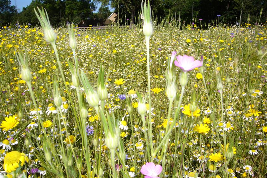 Biodiversity: report says scheme could work, with modifications