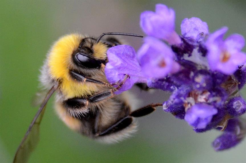 Biodiversity: Bill intended to halt species decline (pic: Noel Reynolds via Flickr)