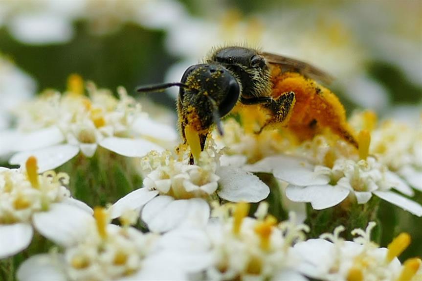 Biodiversity: Environment Bill intended to help reverse decline in wildlife