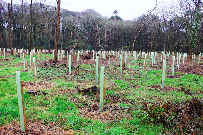 Newly planted saplings in a woodland area (Pic: Getty)