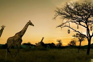 South Africa hosts 123 buyers at Meetings Africa