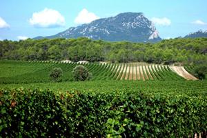Languedoc-Roussillon plans business boost