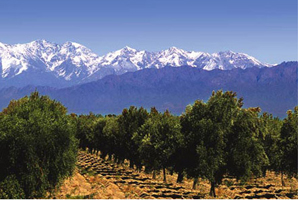 Mendoza, Argentina is the location of Intercontinental Hotels & Resorts' new hote