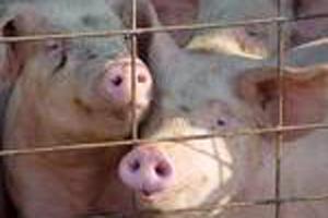 Events industry on alert as swine flu fears grow