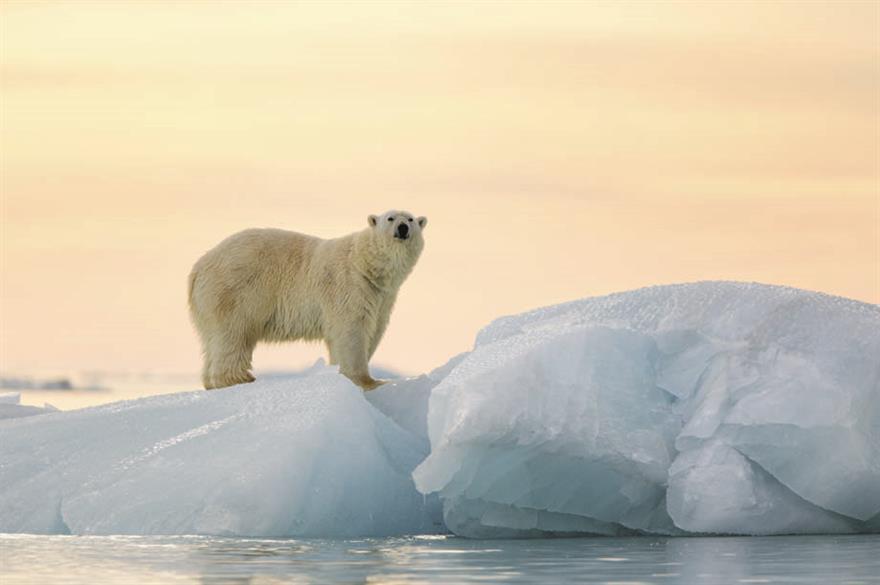 Polar bear, Svalbard, Norway (c. visitnorway.com)