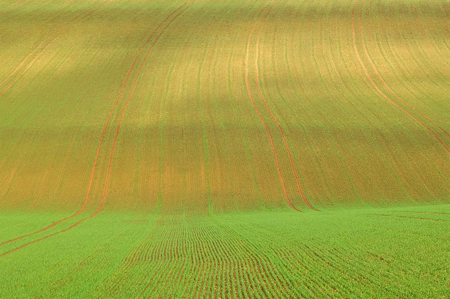 Rural subsidies: new system based on nature benefits rather than farm size. Photograph: Tim Graham/Getty Images