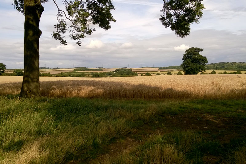 The site where the road is set to be built. Photograph: Lucy Murfett/Chilterns Conservation Board