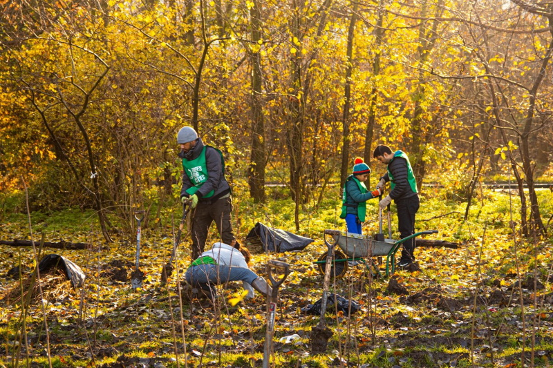 The funding will see hundreds of thousands of trees planted. Photograph: Trees for Cities