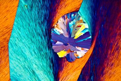 Polarised light micrograph of paracetamol crystals   SCIENCE PHOTO LIBRARY