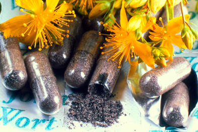 The herbal medicine St John's wort (Hypericum perforatum) helps relieve low mood and anxiety.   SCIENCE PHOTO LIBRARY
