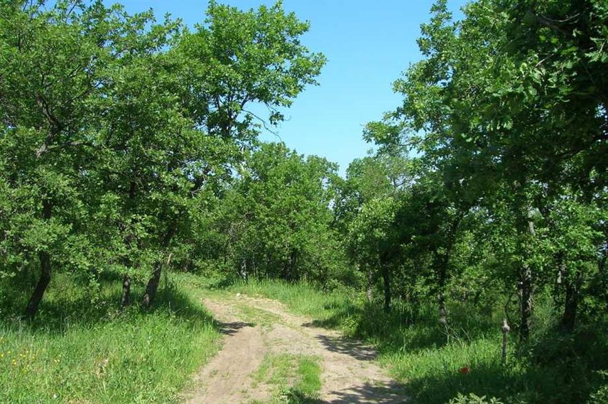Much of Italy's woodland is neglected, says the advisory group. Credit: CC BY-SA 3.0 Generale Lee