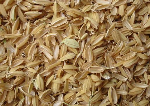 Rice chaff could be used in the plant