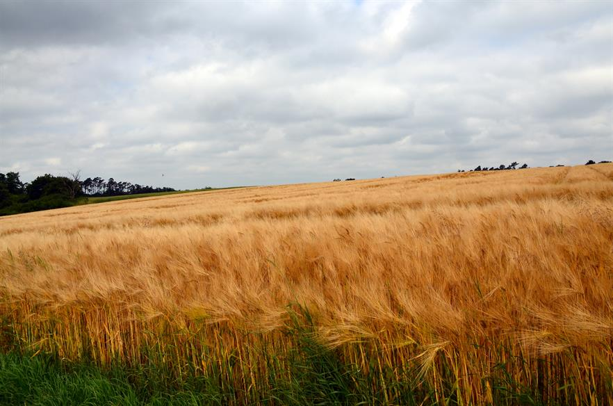 More crops will be grown for energy in the UK