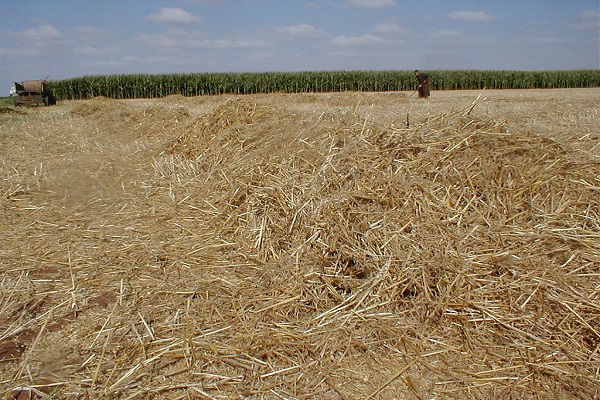 Straw will be one the plants' feedstock sources