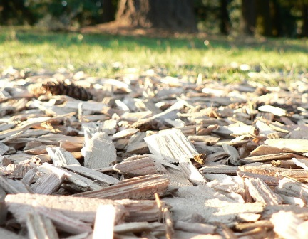 Wood chips will no longer be used by the biomass plant