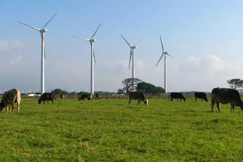 """Acciona's 250 MW """"Eurus"""" wind project in the Oaxaca region of Mexico using Acciona's 1.5 MW turbines"""