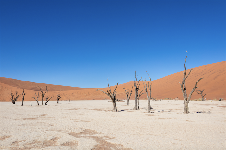 The Deadvlei white clay plan in Namib-Naukluft Park in Namibia (pic credit: Diego Delso/Wikimedia Commons)