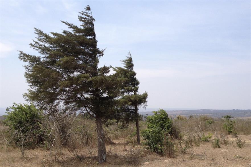 "Windlab's CEO said Miombi Hewani enjoys ""an excellent wind resource"""