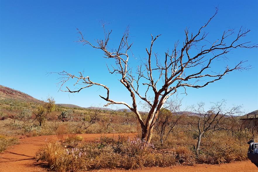 The Asian Renewable Energy Hub would be built in the desert region of Pilbara, Western Australia (pic: Renata Wright/Pixabay)
