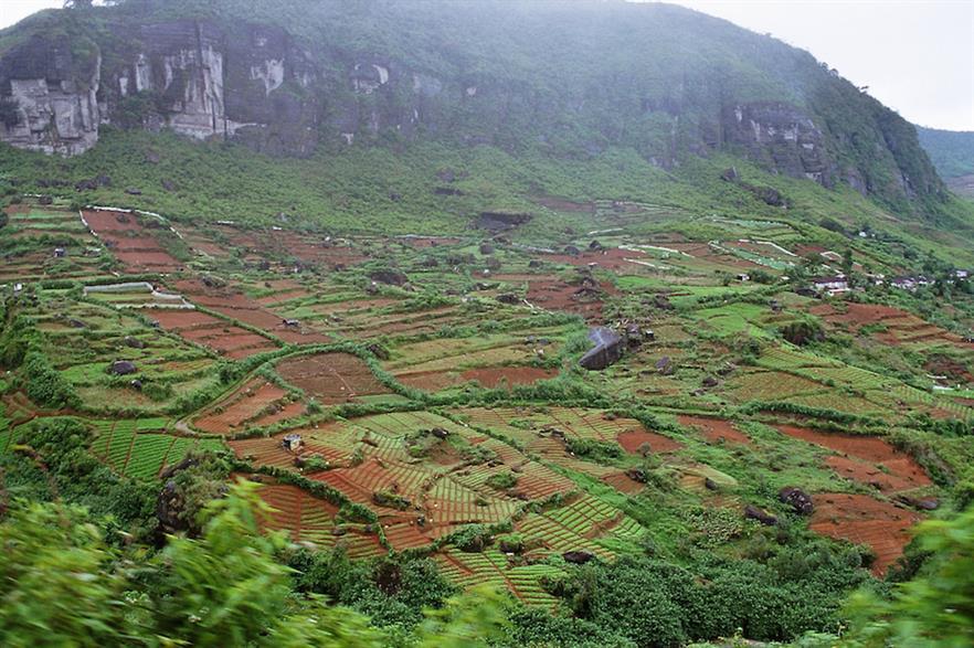 A Sri Lanka tea plantation