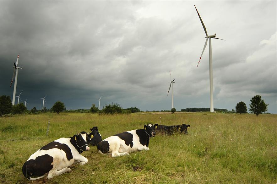 The Polish onshore wind market could soon start moo-ving once more (pic: SCA Svenska Cellulosa Aktiebolaget)