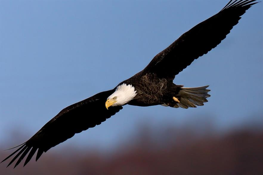 Independent monitors will monitor bird kills and injuries for the FWS (pic: William H. Majoros)