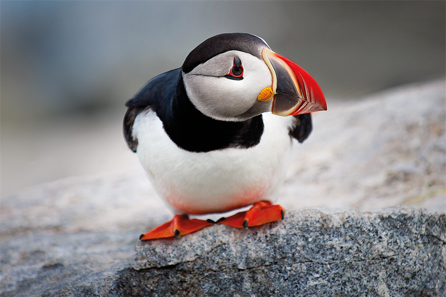 Protecting marine mammals and sea birds is one of the UK register's aims