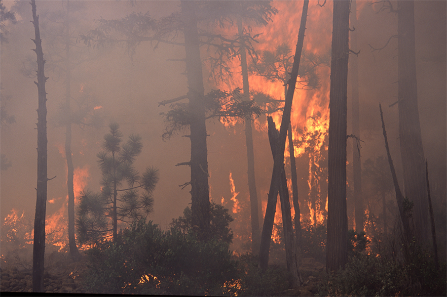 Increasing numbers of events such as wildfires and flooding across the globe illustrate the urgent need for action on the climate emergency (pic: Bureau of Land Management)