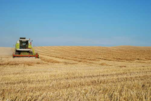 Agriculture: potash is a vital strategic resource used in the production of fertilisers for farming (Image credit: Lars Sundstrom)