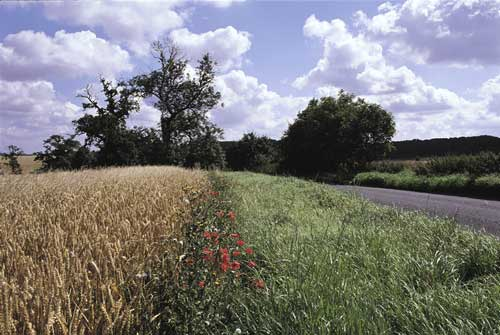 Restoration: creating valuable high quality habitats (Image credit: andy hay [rspb-images.com])