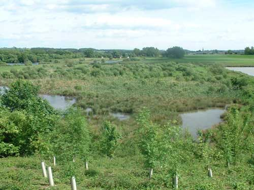 Marfield Wetlands, the 94 acre site near Masham. Image Lafarge