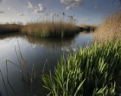 Middleton Lakes RSPB reserve reedbed in Staffordshire. Picture Andy Hay/RSPB