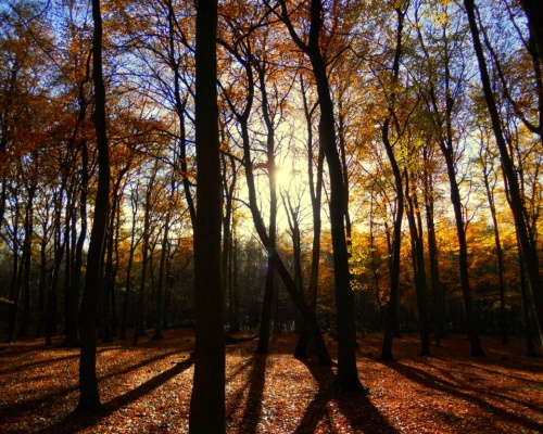 Ancient Hopwas Woods is safe thanks to Lafarge Tarmac negotiations. Picture: James Broad