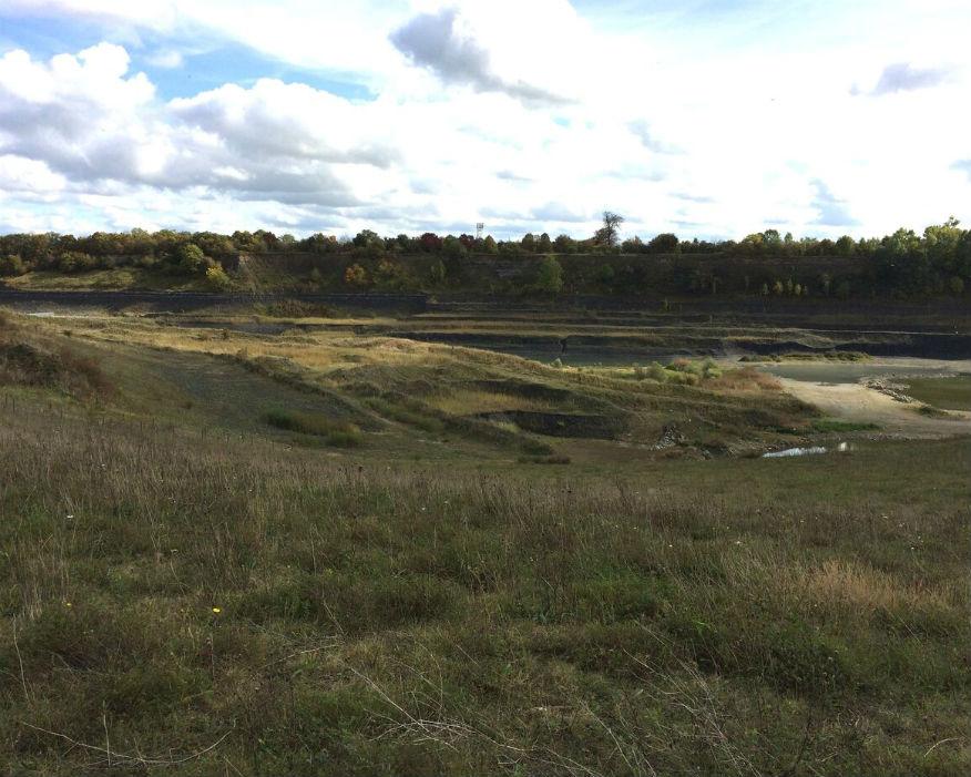 Southam quarry, Warwickshire, reintroduced wildlife. Picture: Cemex/RSPB
